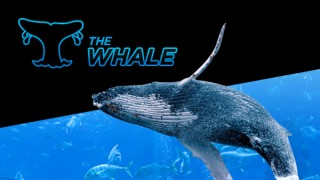 888poker-super-whale